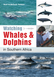 Watching-Whales and Dolphins